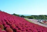 Đến Nhật nhớ khám phá ngọn đồi đẹp như cổ tích này
