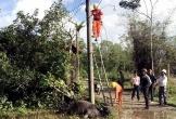 Trâu chết vì rò điện lưới
