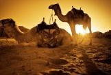 Ngỡ ngàng với chuyến phiêu lưu kỳ thú ở Jordan