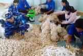 4 tấn tỏi Lý Sơn đầu tiên về Đà Nẵng sẵn sàng cho chiến dịch cứu trợ
