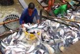 Đại gia thủy sản An Giang lỗ thêm gần 200 tỷ