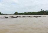 Thương tâm nam thanh niên bơi sông tìm trâu bị nước cuốn trôi