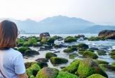 Clip bãi đá ở rạn Nam Ô tuyệt đẹp mùa rêu xanh