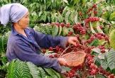 Người Thái nhập hơn 90% lượng cà phê từ Việt Nam