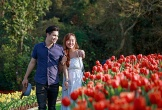 Vườn hoa tulip lớn nhất Việt Nam với một triệu bông