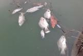Tìm nguyên nhân cá chết, nước đổi màu ở Đà Nẵng