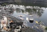 Cá chết trắng kênh cạnh trạm xử lý nước thải