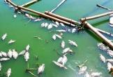 Tình trạng cá chết ở hồ trung tâm Đà Nẵng ngày càng nhiều