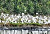 Độc đáo khu bảo tồn đất ngập nước Láng Sen