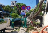 Vì sao Đà Nẵng cắt tỉa hàng chục ngàn cây xanh giữa mùa nắng nóng?
