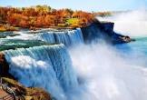 Canada mùa thu đẹp như tranh vẽ với lá phong vàng rơi