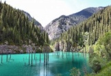 Khám phá rừng cây mọc ngược giữa hồ nước