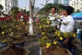 Thị trường hoa tết Đà Nẵng: Nhiều người bán, ít người mua