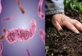 """Sau mưa lũ, 4 người tử vong vì mắc """"vi khuẩn ăn thịt người"""" whitmore"""