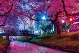 Choáng trước cảnh tượng đẹp như truyện cổ tích tại Nhật Bản