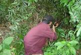 Đi săn bắt, 1 người bị bắn chết trong rừng