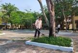 Đà Nẵng: Rà soát cây xanh, đảm bảm an toàn tại trường học