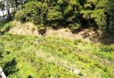 Cần siết chặt bảo vệ Vườn quốc gia Tam Đảo