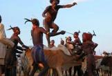Muốn cưới được vợ, phải nhảy qua lưng bò