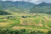 Ngắm đèo Khau Phạ mờ ảo trong mây