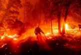 Cháy rừng kỷ lục có thể đẩy Mỹ vào khủng hoảng tài chính