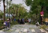 Hàng nghìn nhà dân tốc mái, 1 người ở Huế bị cây đổ đè tử vong trong bão
