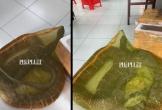 Tạm giữ người đàn ông chở rắn hổ mang chúa hơn 20kg đi bán ở TP.HCM