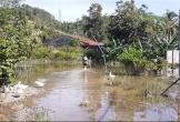 Người dân khốn khổ vì nhà nằm trong quy hoạch dự án bị ngập nước